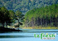 Hồ Tuyền Lâm - Thiên đường xanh của Đà Lạt